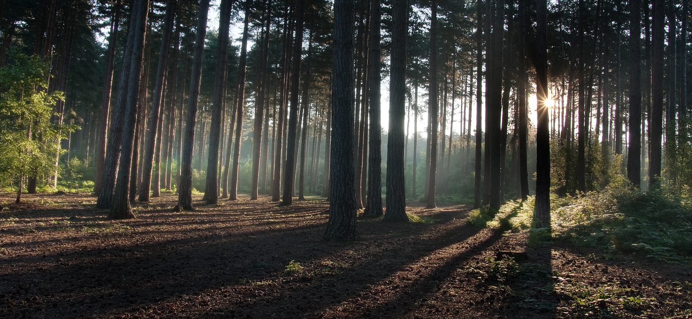 FOREST LIGHT by Kevin Day.jpg