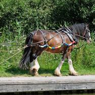 WORKING HORSE by Bryan Fisher.jpg