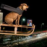 FLYING HOME FOR XMAS by Chris Lloyd.jpg