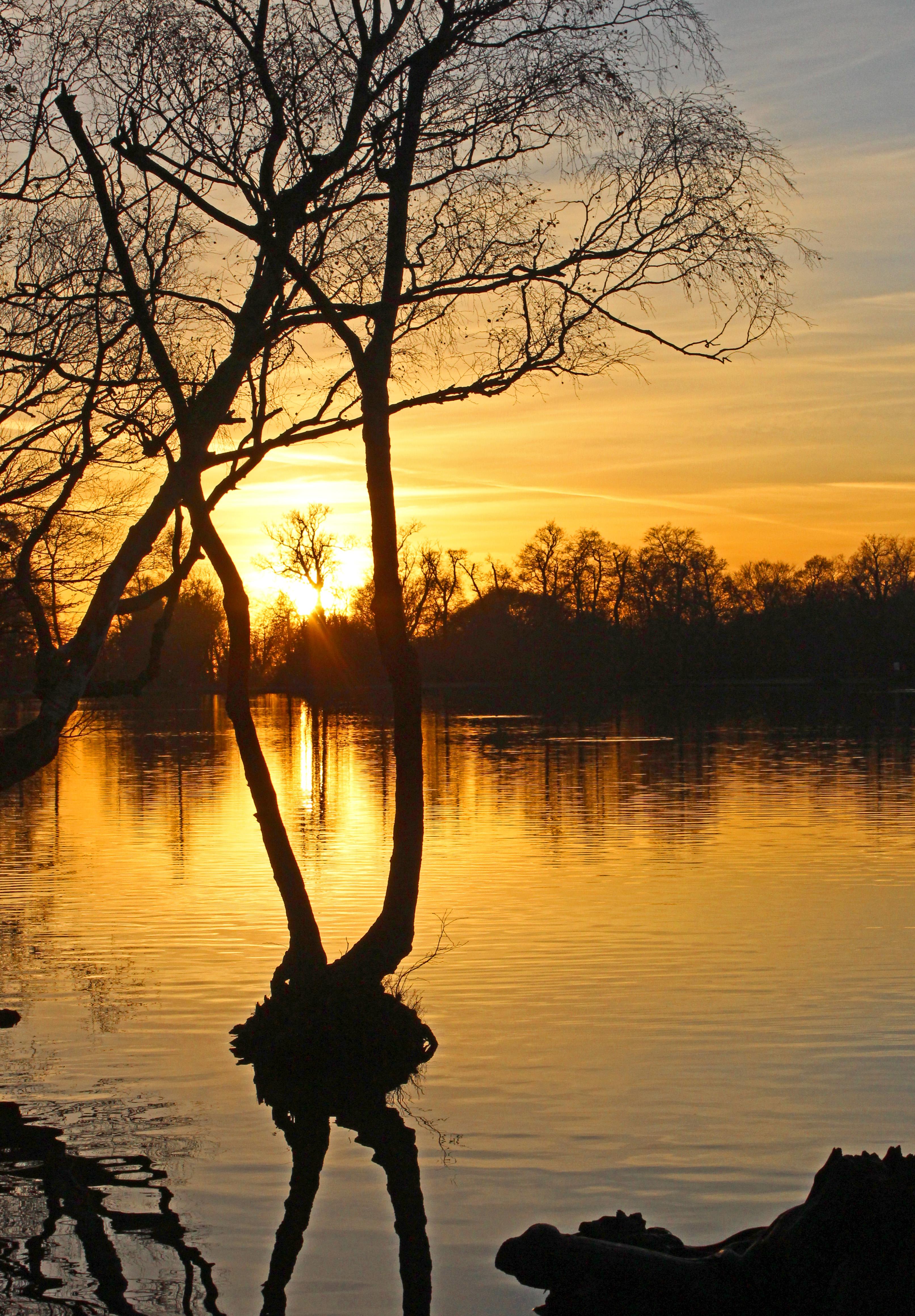 SUNSET by Sue Avey.jpg