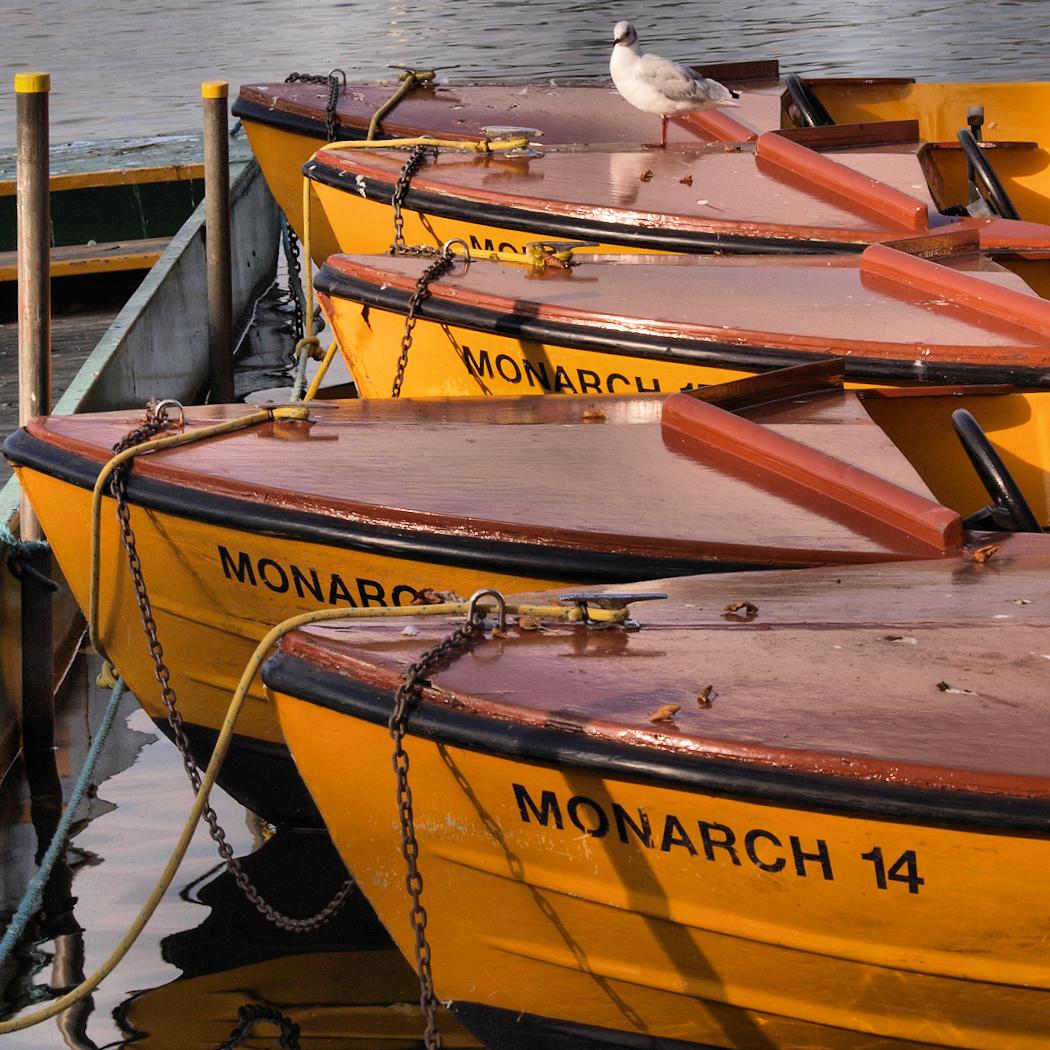 WATER MONARCHS by Lorraine Gibbons.jpg