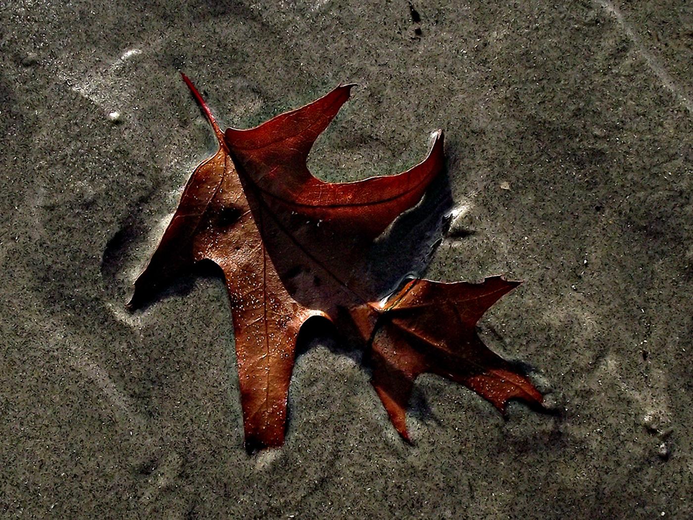 SEA WEED by Liam Mengham
