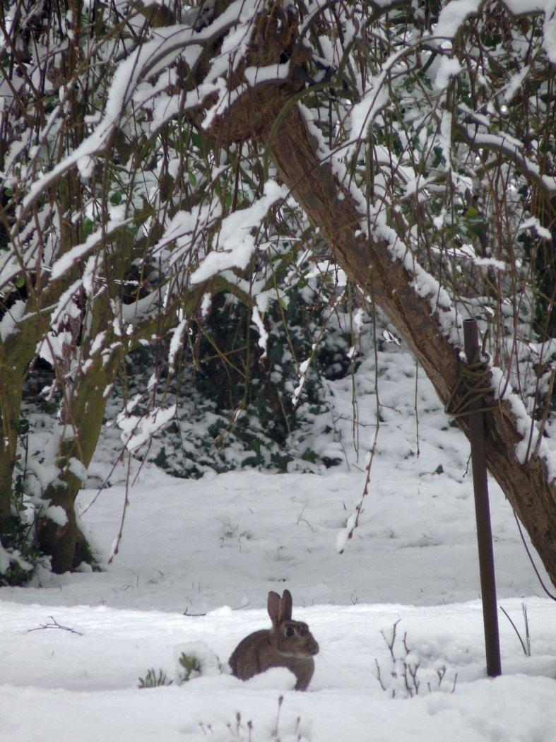 Snow_Rabbit_by_Jean_Porter.jpg