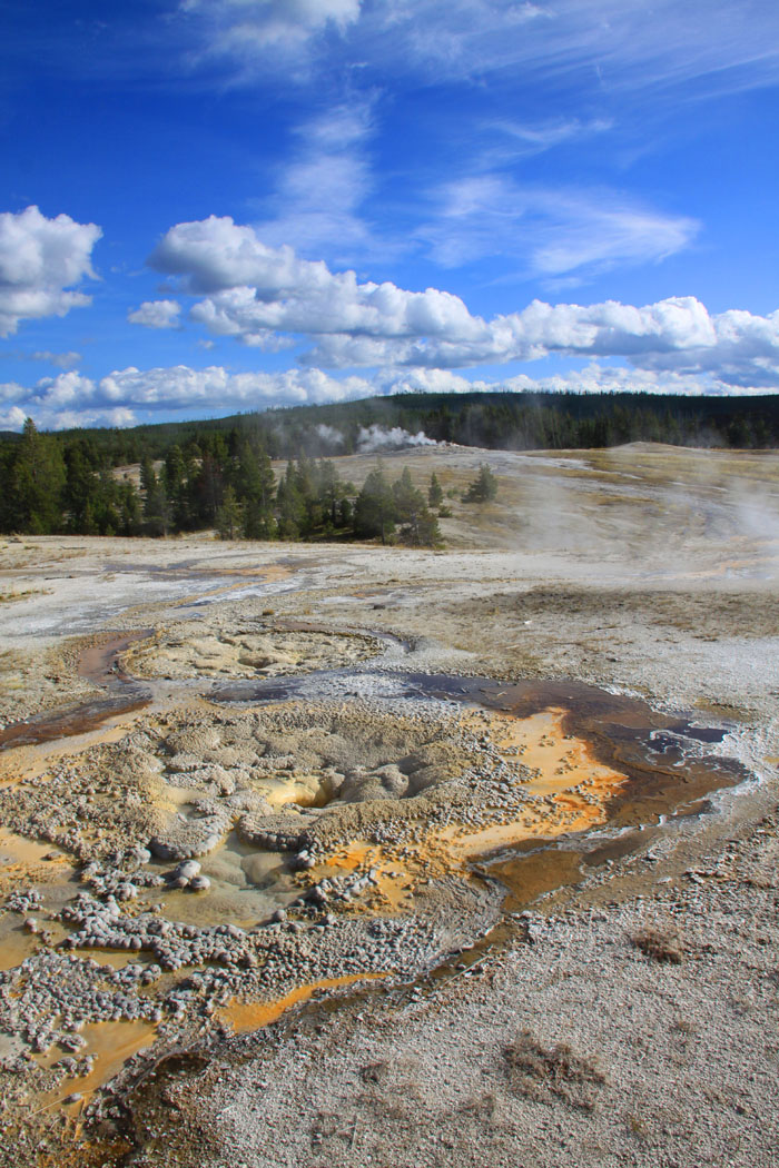 YELLOWSTONE PARK by Joan Wells.jpg