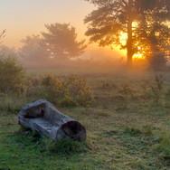 SUN RISING  by Dave Taylor.jpg