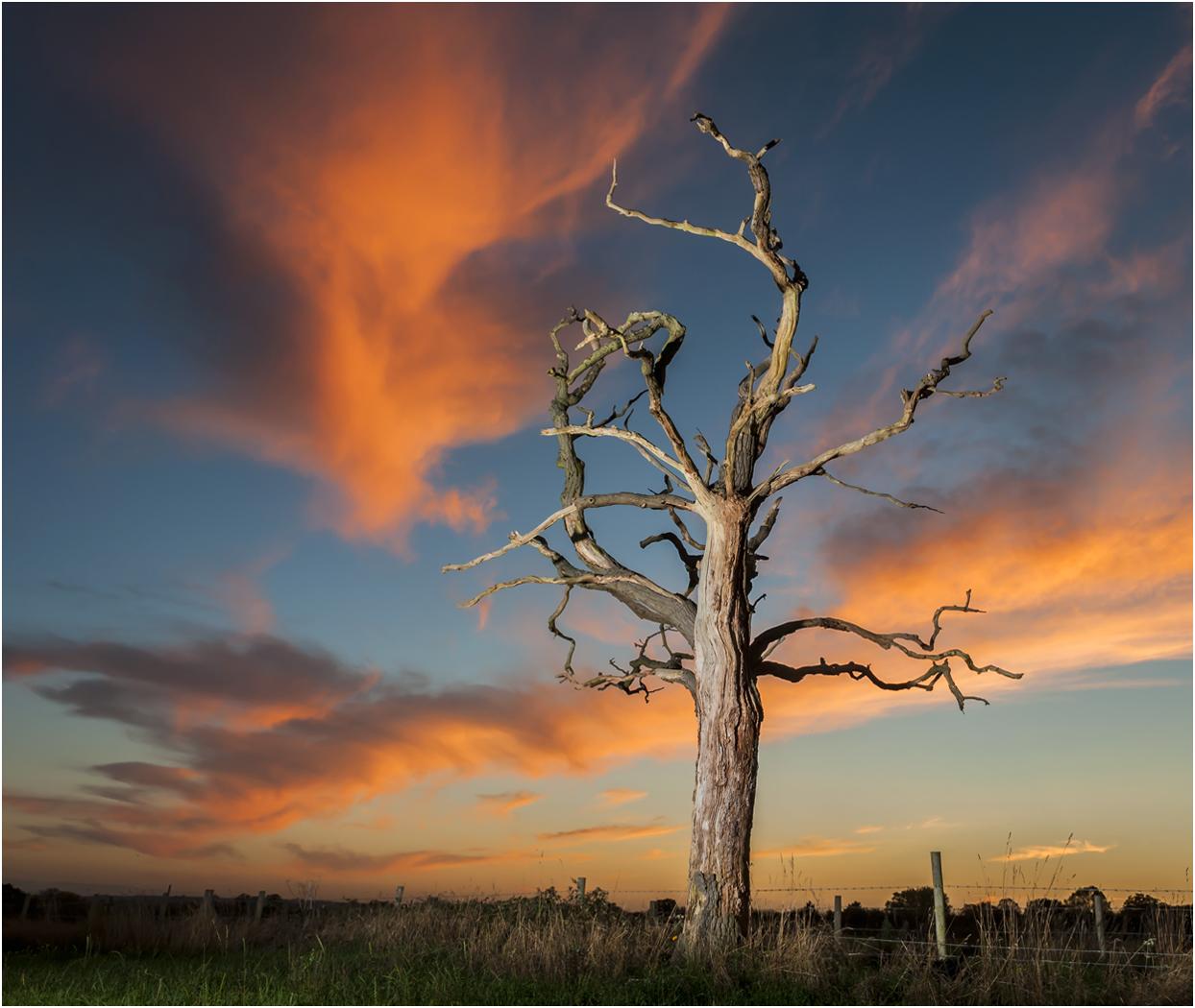 DEAD TREE SUNSET by Jerry Lake.jpg