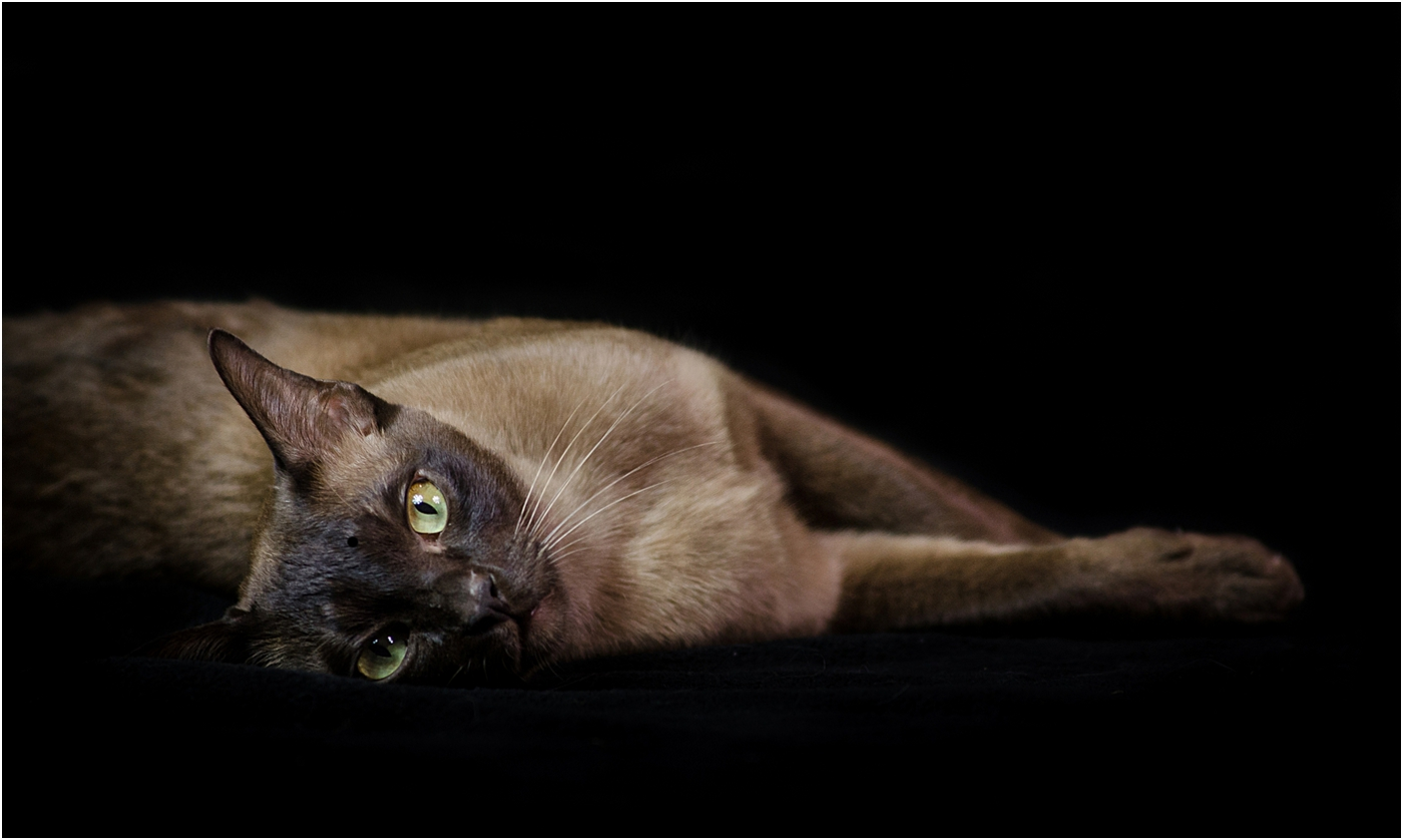 CAT NAP by Tanja Davis.jpg