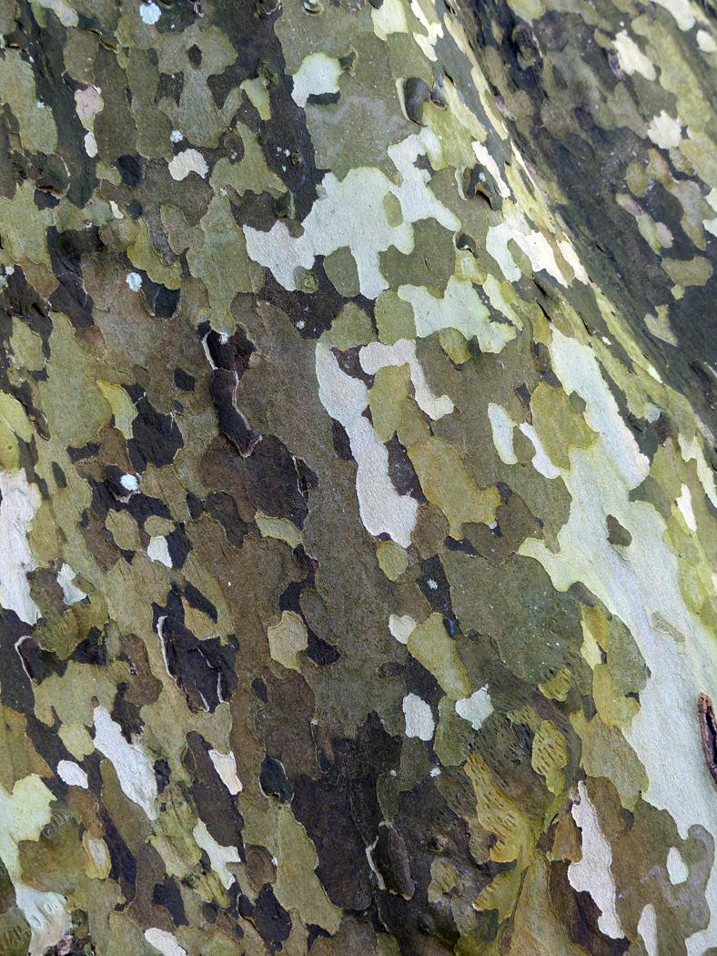 TREE CAMOUFLAGE by Jane Morrish.jpg