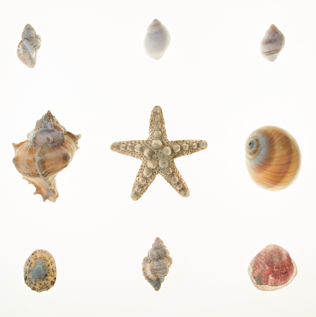 STARFISH & SHELLS by Peter Morrish.jpg