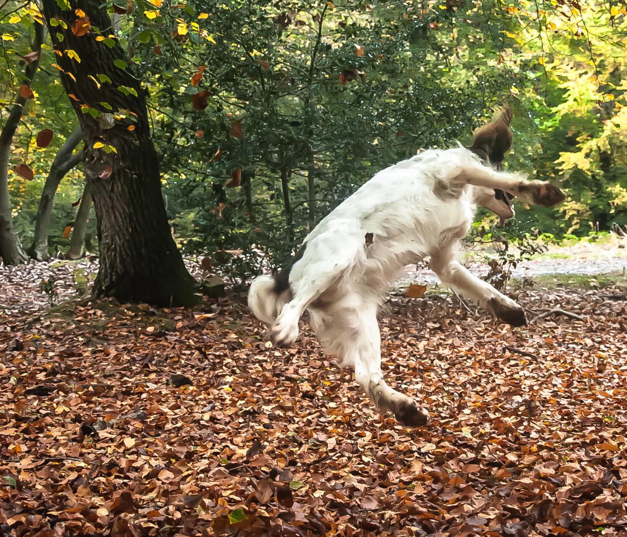 FLYING DOG IN AIR by Rob Lowe.jpg