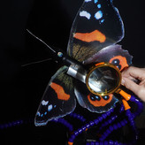 THE MAKING OF A BUTTERFLY by Mike Singer