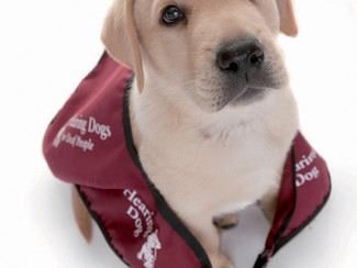 Supporting Hearing Dogs
