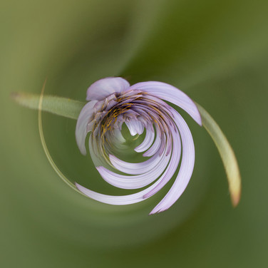 SWIRLING SALSIFY by Mark Collins