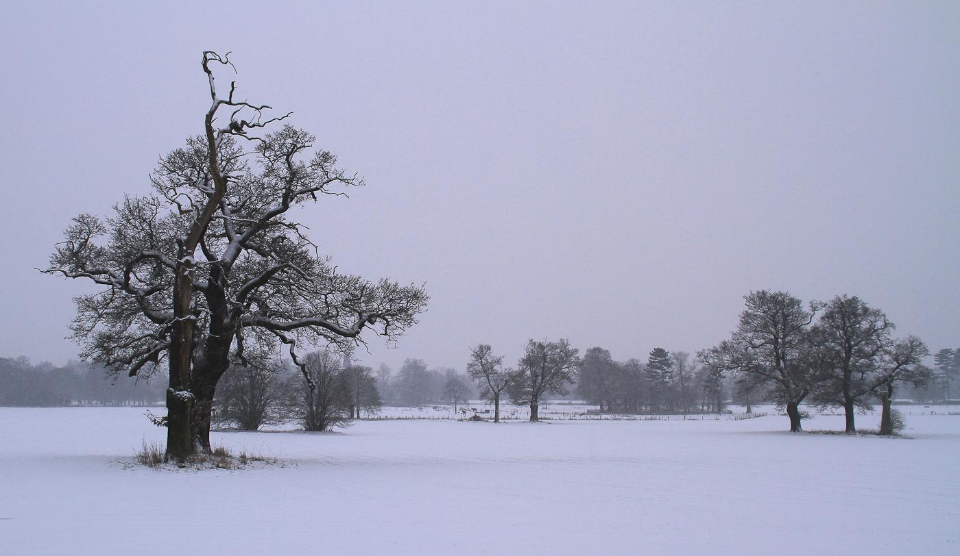 TREES IN WINTER  by Viki Herbert-Coulson.jpg