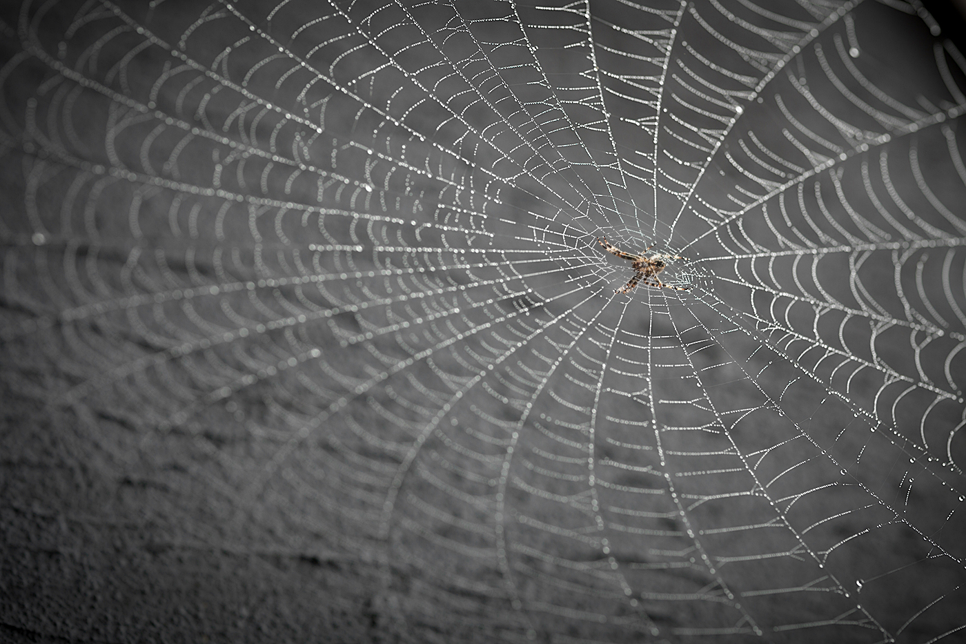 COBWEB by Kevin Day.jpg