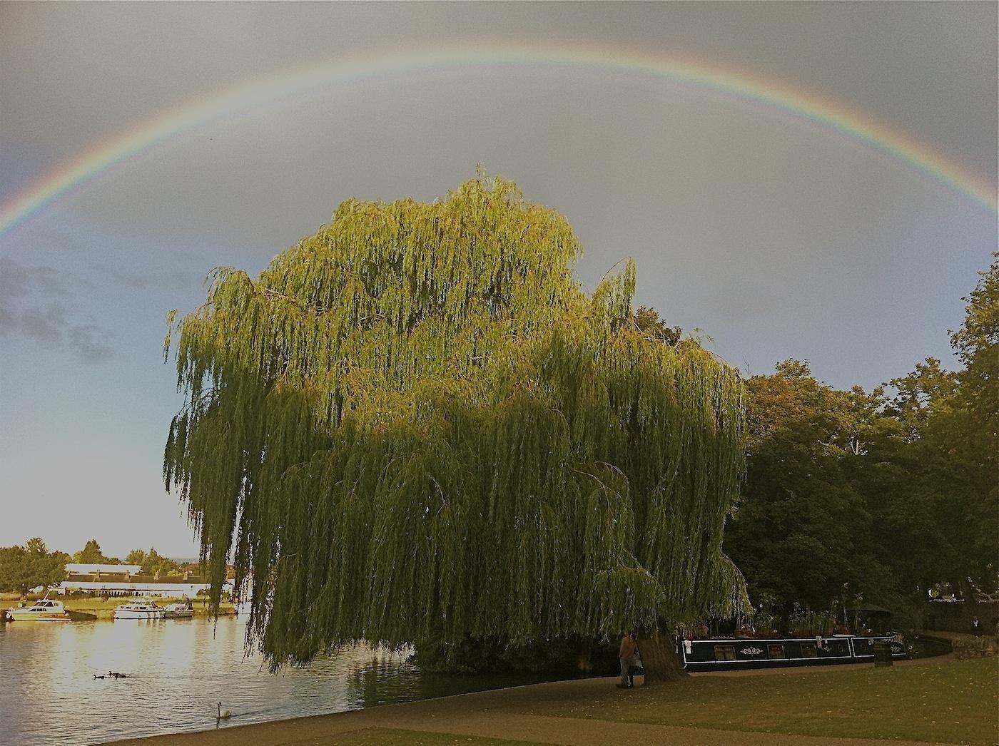 WILLOW UNDER AN EVENING RAINBOW by Bill Berloth.JPG