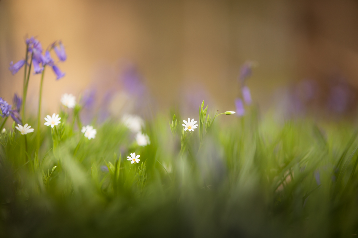 SPRING by Kevin Day