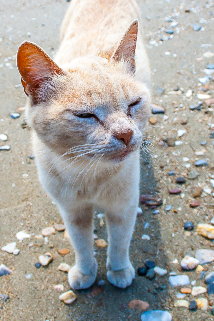 HAPPY CAT ON A BEACH by Kate Lowe.jpg