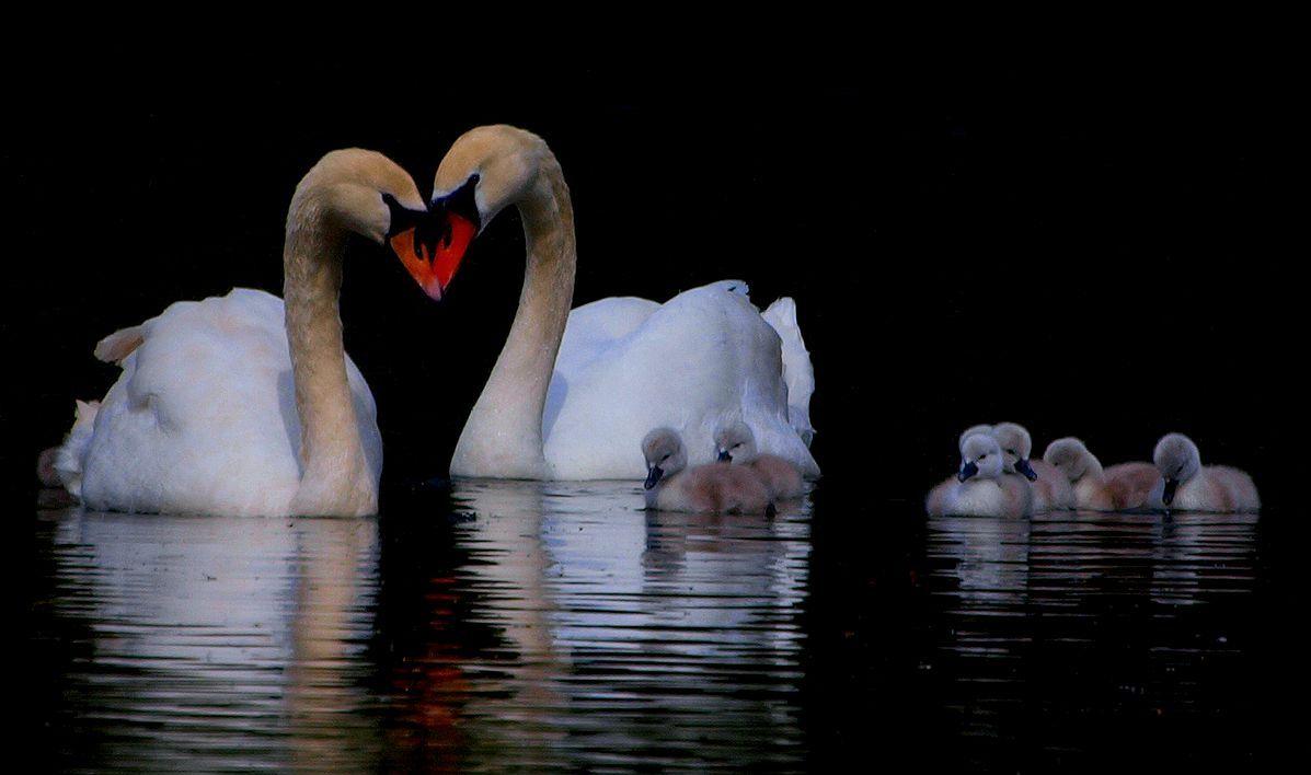 HEART OF THE FAMILY by Lorraine Gibbons.jpg.jpg