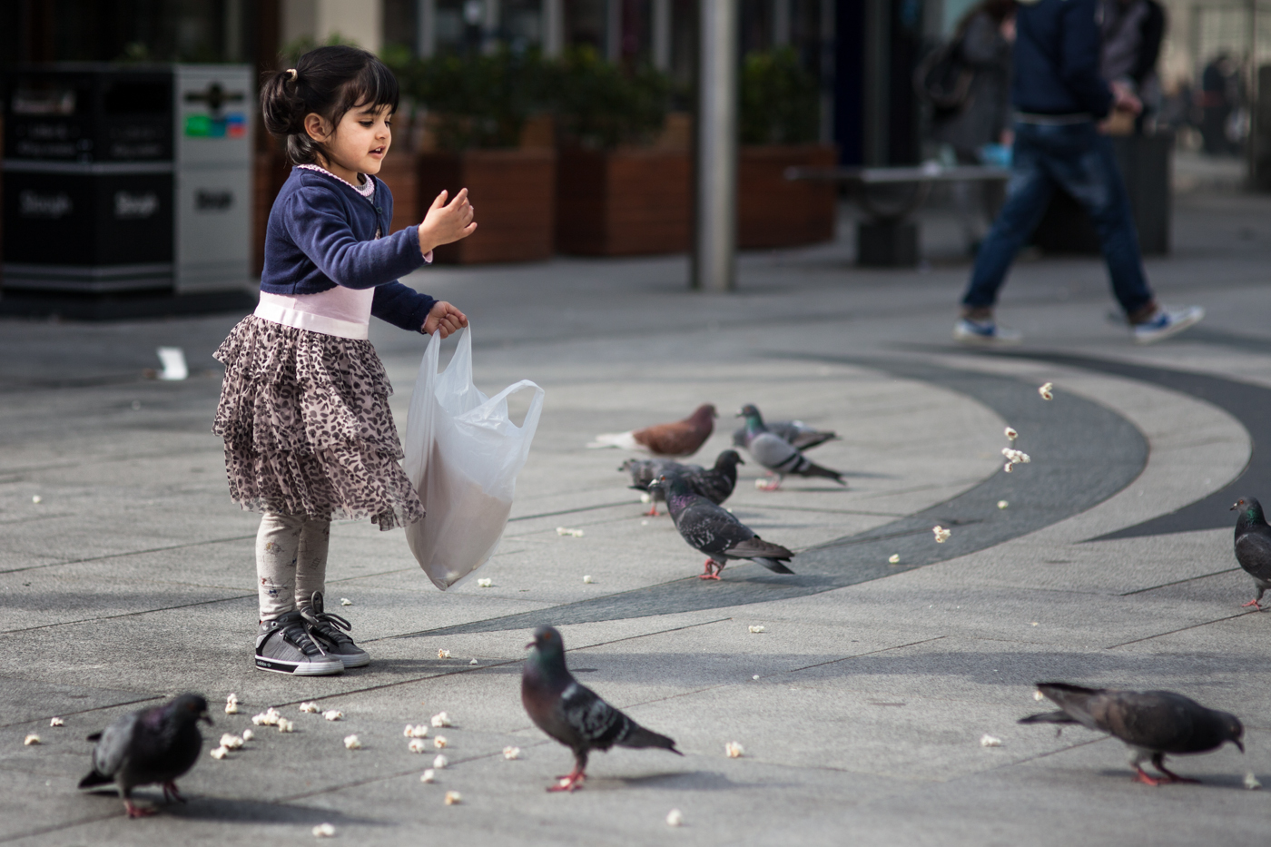 FEED THE BIRDS by Kevin Day.jpg