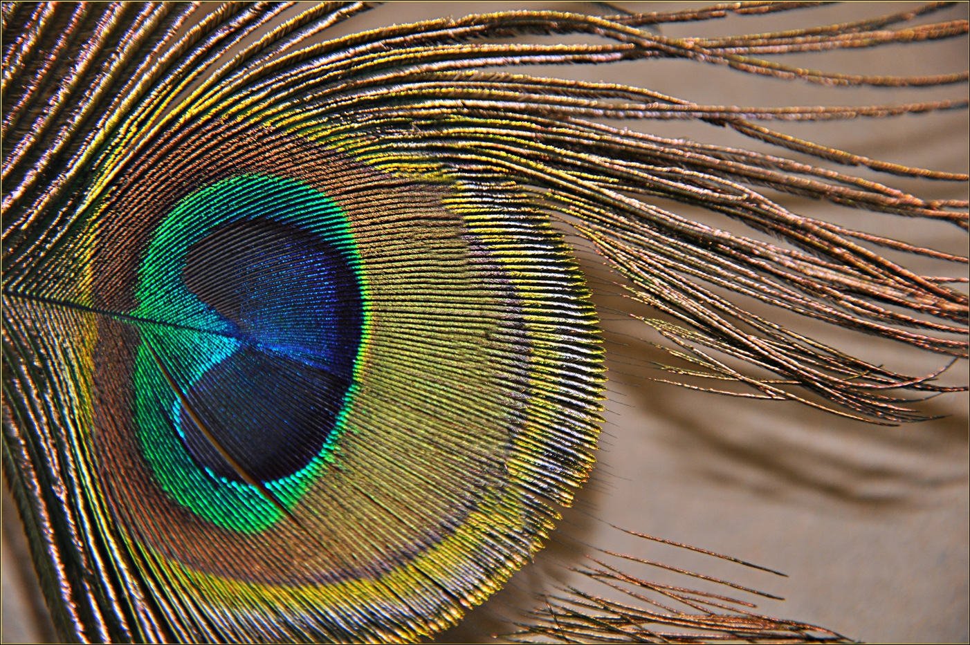BRIGHT EYE by Rojer Weightman