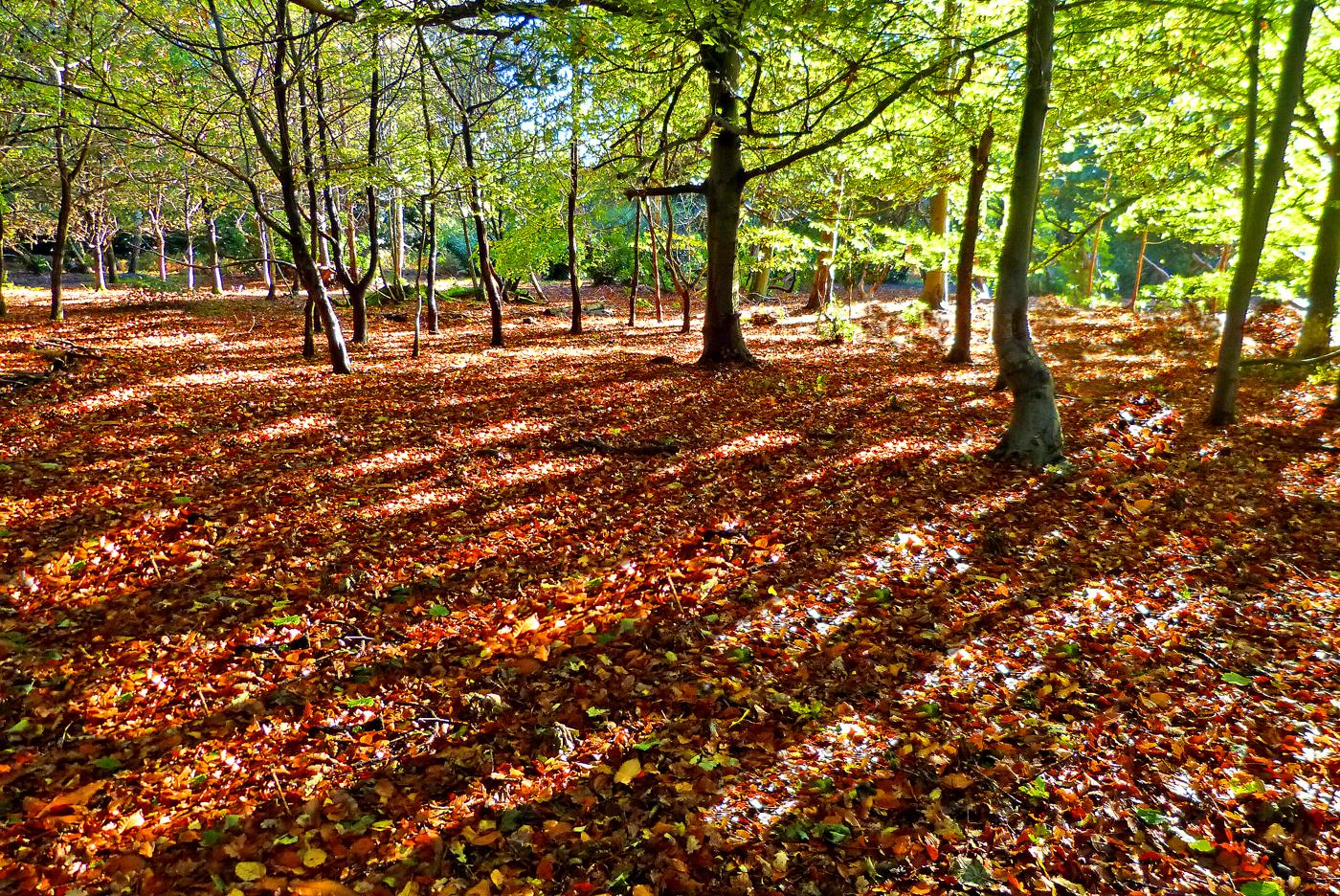 TREE SHADOWS by John Cano-Lopez.jpg