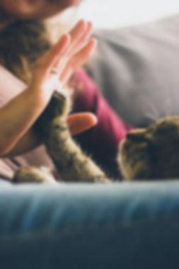 Cat high five.jpeg