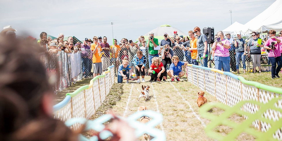 Weenie Dog Races