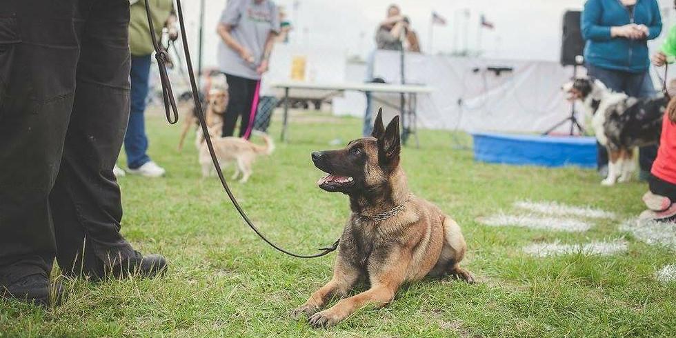 Teach Your Dog A Trick
