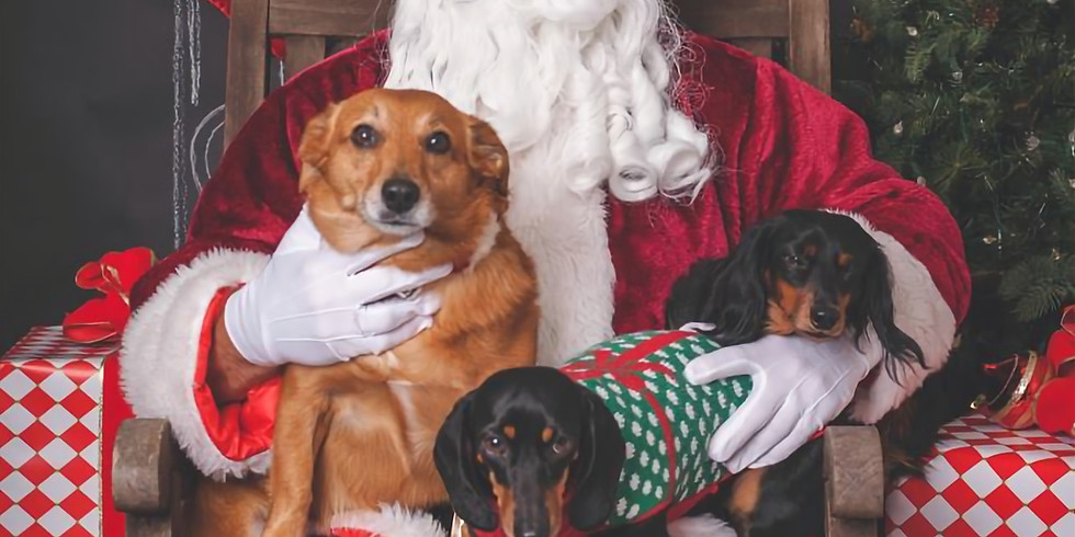 Santa Paws Pictures!