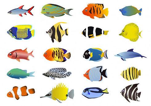 Multile fish.jpg