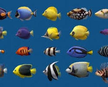Multiple fish.jpg
