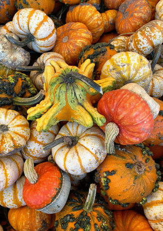 Gourds_IMG_1834.jpg
