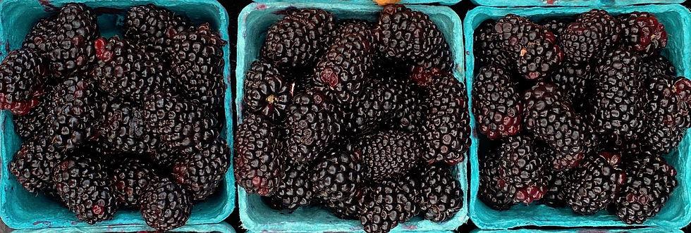 Blackberries_IMG_4966.jpg