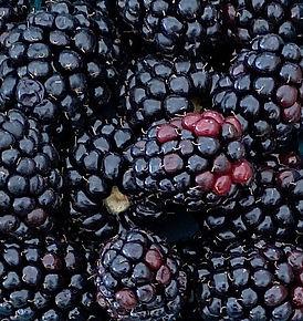 Berries_Blackberries_Local_IMG_9603.jpg