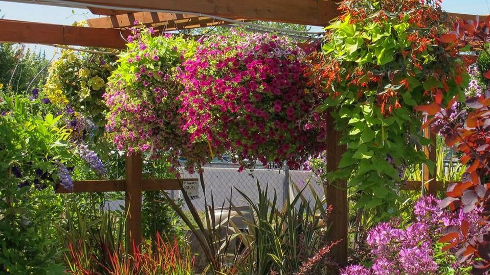 Plant Nursery Arbors Summer