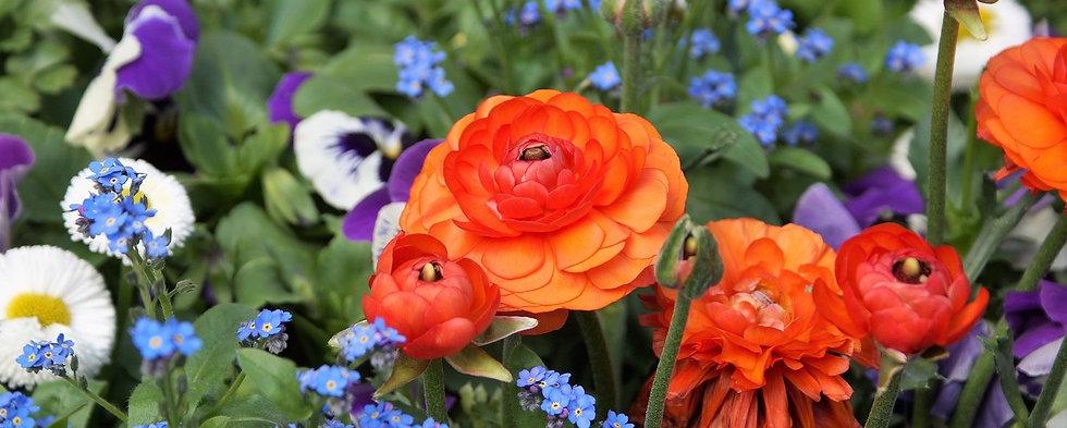 Spring_Garden_Editorial_pixabay-2214010_