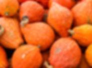 Orange hubbard winter squash at the farm