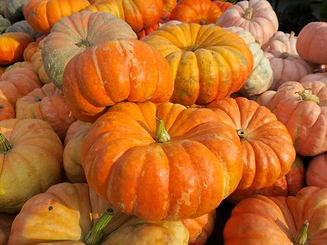 Pumpkins_IMG_3099.jpg