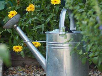 Gardenwateringcan_Pixabay_garden-2497476