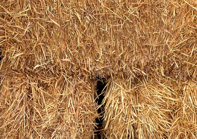 Autumn_HayBale_IMG_2472 copy.jpg