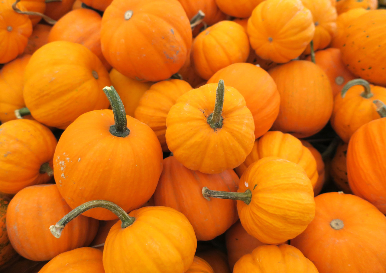 Pumpkin_Mini_IMG_3106.jpg
