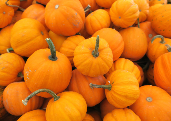 Pumpkin_Mini_IMG_3106.jpg