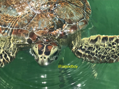 sea turtle.jpg