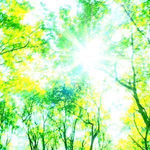 遥かな森のこえ