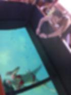 barquario-fundo-de-vidro2