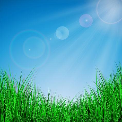 Summer sky & grass.jpg