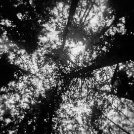 Panther Creek - Treeline
