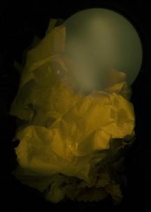 Tissue Sun - Green
