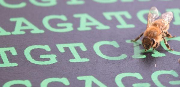 Beecode_mpgenetics